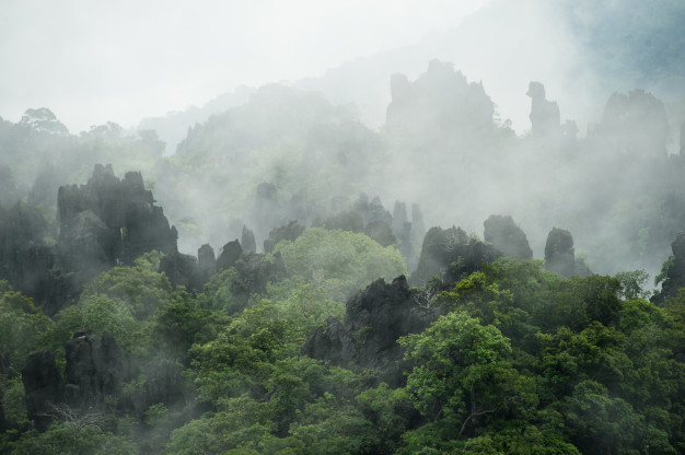 distant_trees_surrounded_by_thin_fog_limestone_ridge_45756_144.jpg