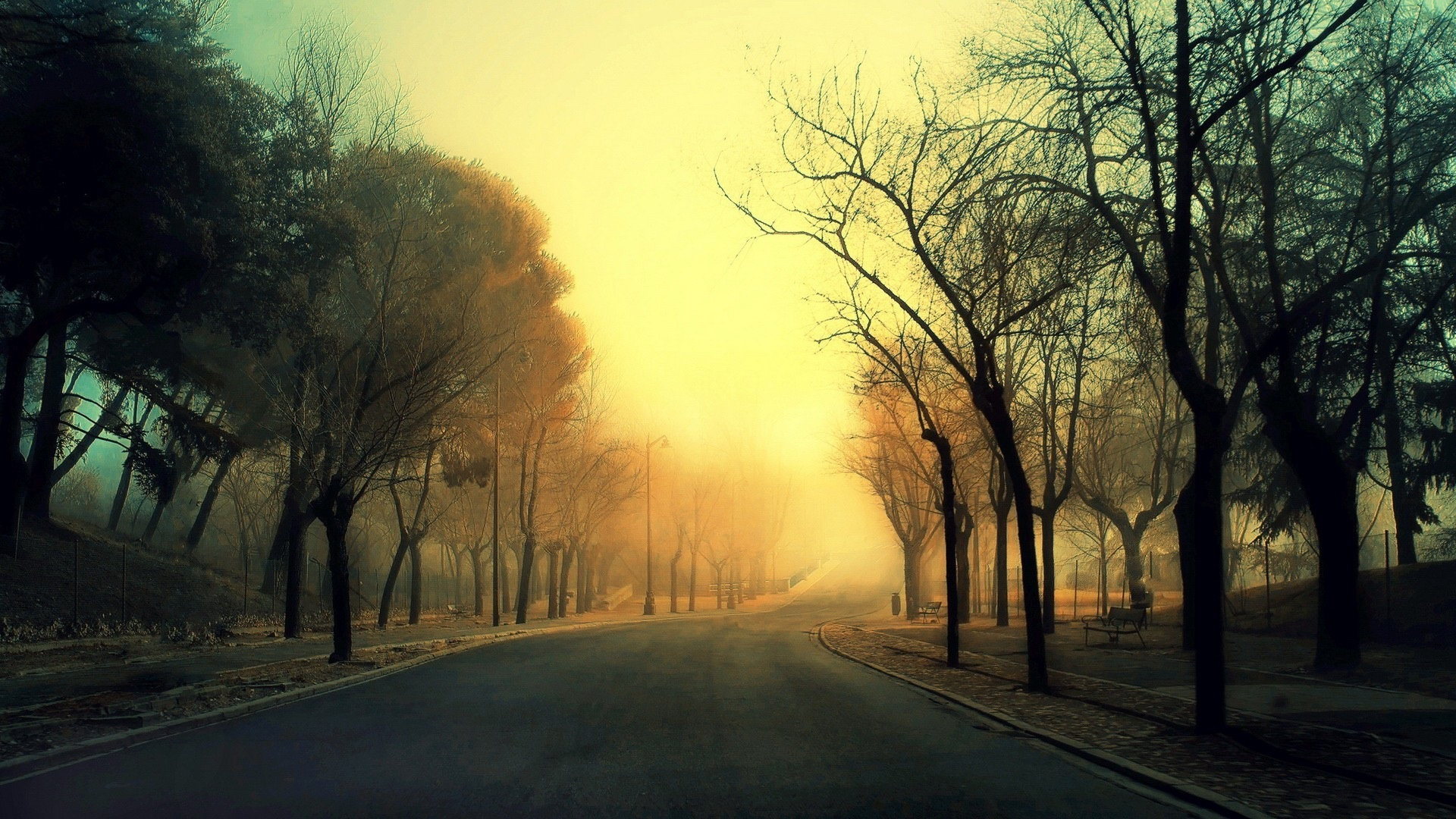 road_trees_fog_morning_1920x1080.jpg