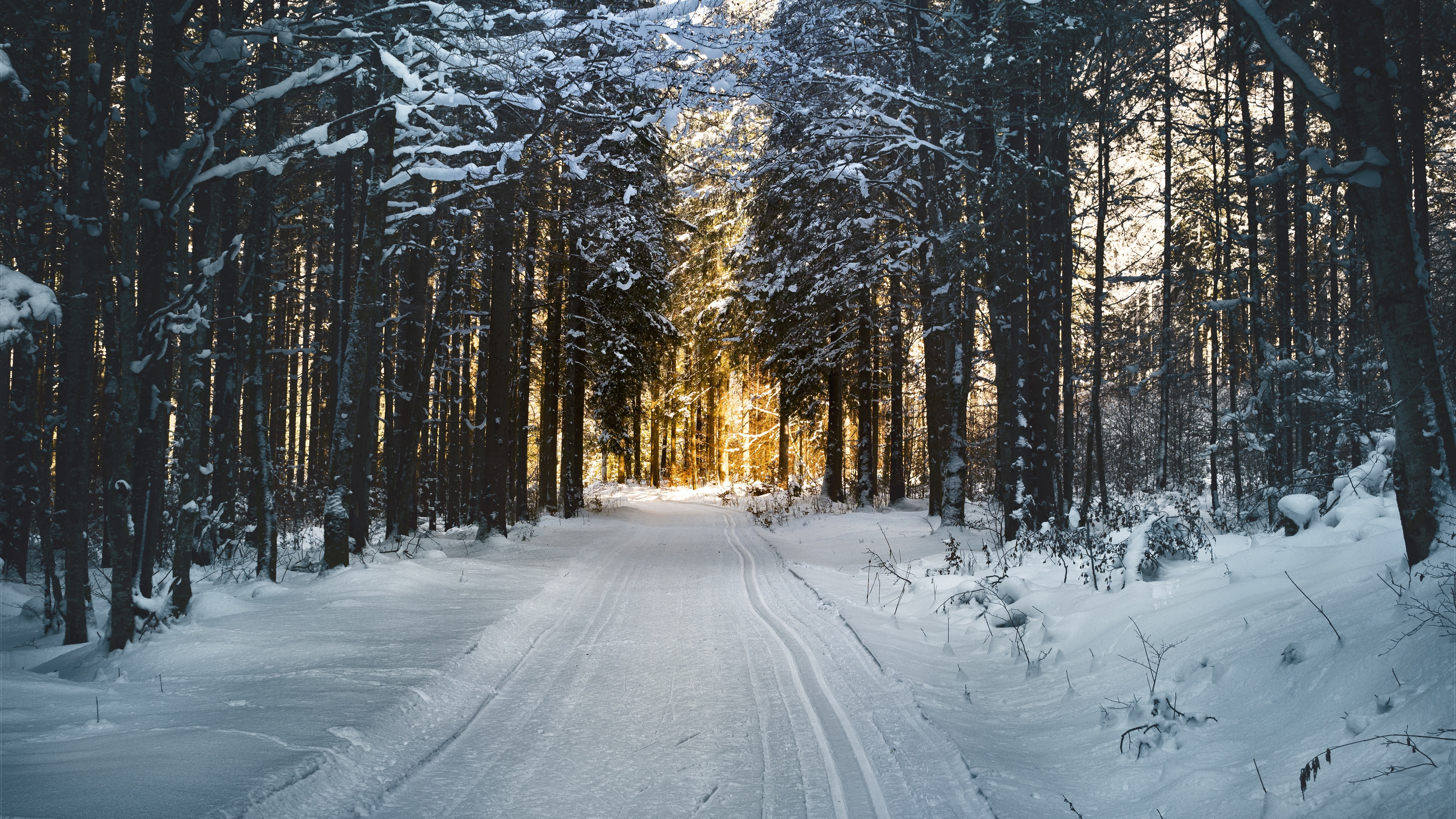 winter_trees_path_snow_sunshine_5120x2880.jpg